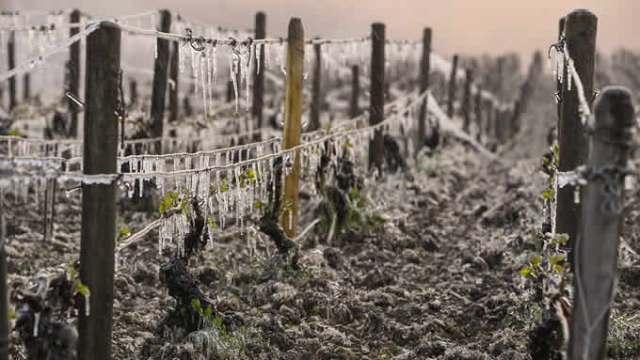 la-balla-del-controllo-del-clima-vigne-francia.jpg