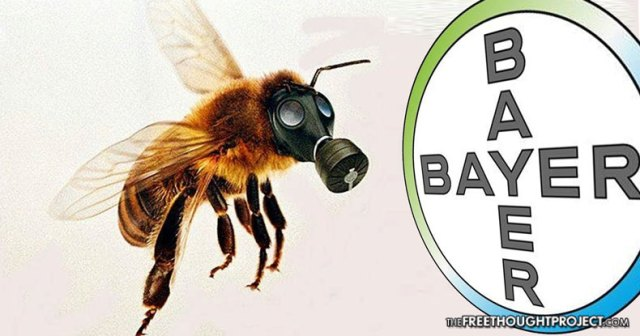 bayer-bees.jpg